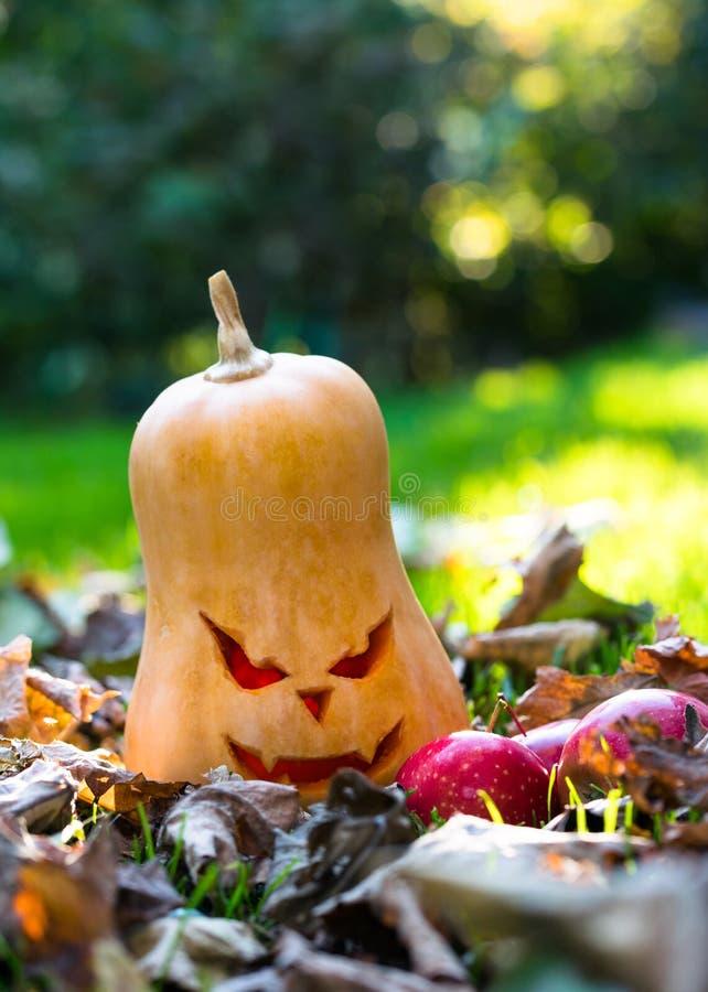 """Фонарик Джек-o """"-, традиционная высекаенная лампа тыквы Украшения хеллоуина осени стоковые изображения"""