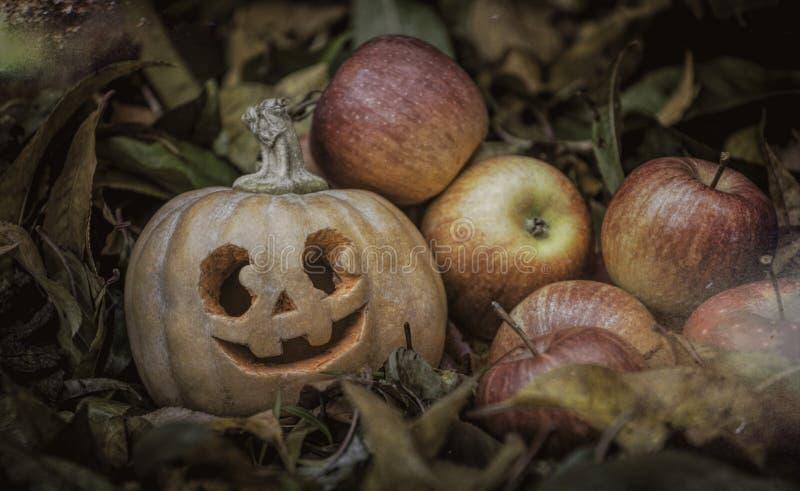 """Фонарик Джек-o """"-, традиционная высекаенная лампа тыквы Украшения хеллоуина осени стоковые изображения rf"""