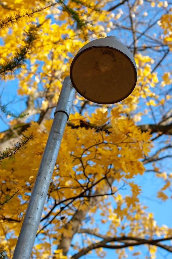 Фонарный столб на предпосылке деревьев осени стоковая фотография rf