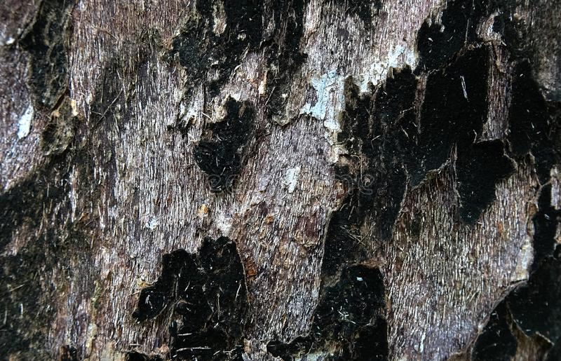Фоновое изображение коркы дерева бесполезного стоковые фотографии rf