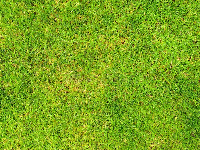 Фоновое изображение поля травы стоковые изображения rf