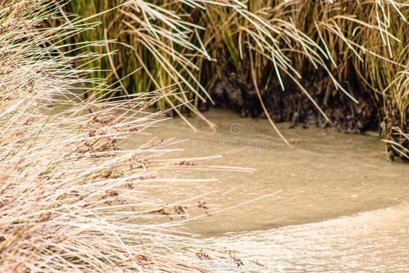 Фоновое изображение травы болота в прибрежных заболоченных местах стоковые фото