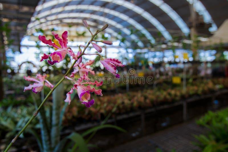Фоновое изображение цветков орхидеи на ферме там космос для входного сигнала текста цветок нерезкости предпосылки внутрь как взгл стоковые изображения