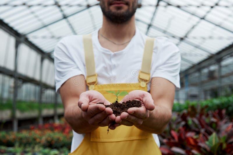 Фоновый фон Менсы держат землю за руки, а растение в середине мало стоковые изображения