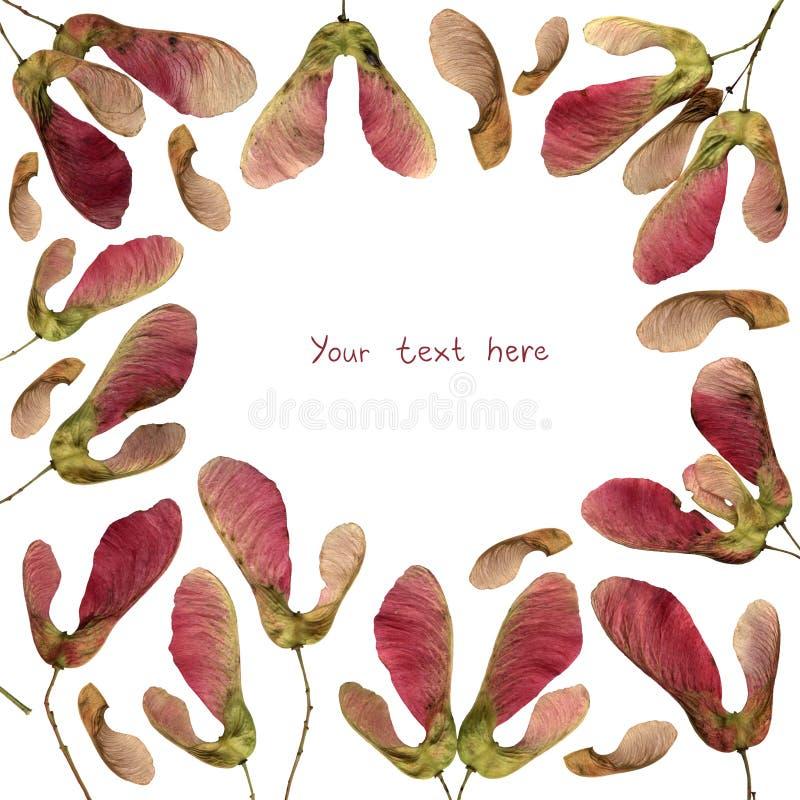 Фоновый фон рамки розового семена стоковая фотография