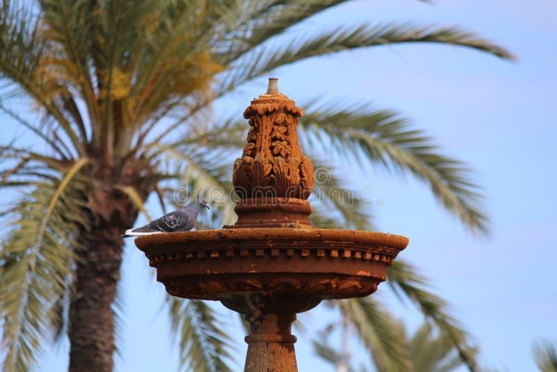 Фонтан птицы стоковая фотография rf