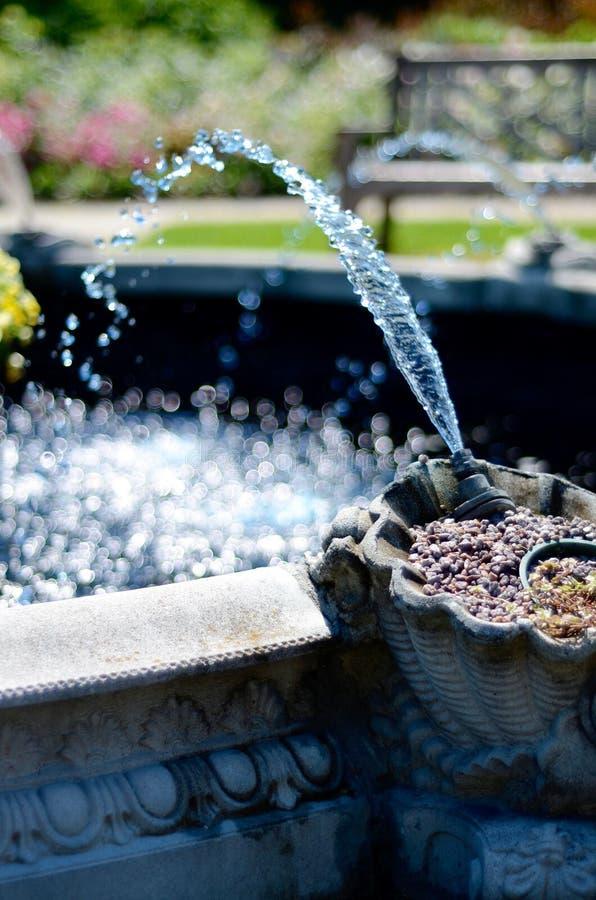 Фонтан squirting в бассейн стоковое фото rf
