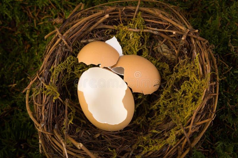 Фон гнезда младенца цифровой стоковая фотография