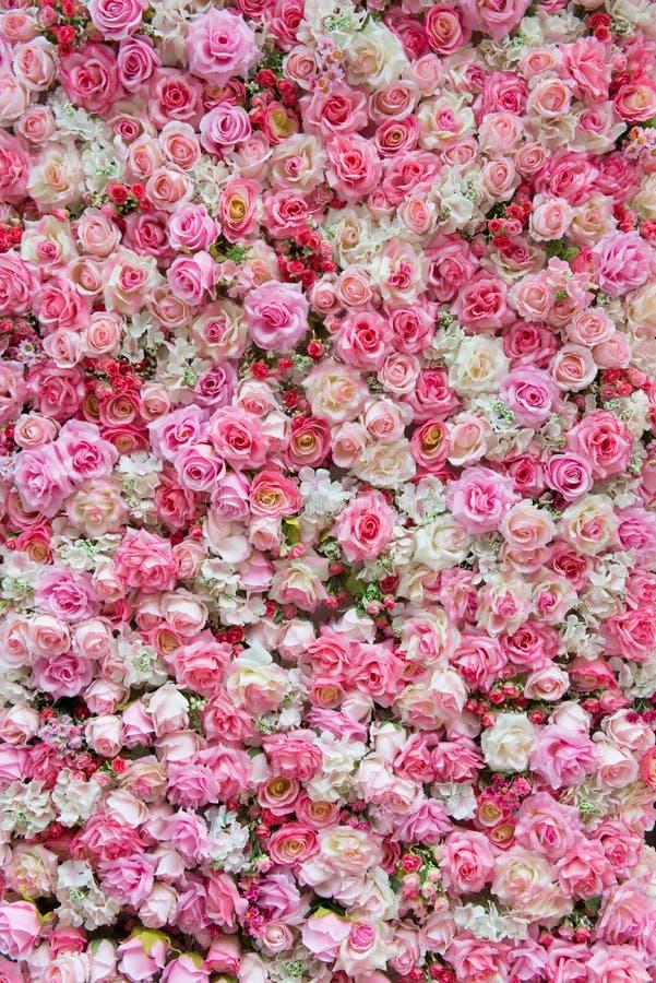 Фон пинка и белой розы стоковые фотографии rf
