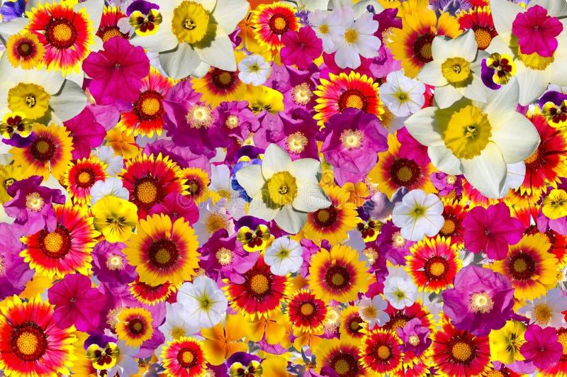 Фон смешанный цвет, цветы стоковые изображения