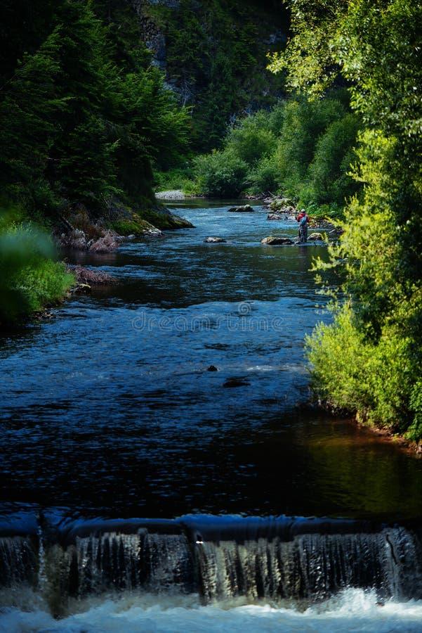 Форел-рыбная ловля в реке горы летом стоковые изображения rf