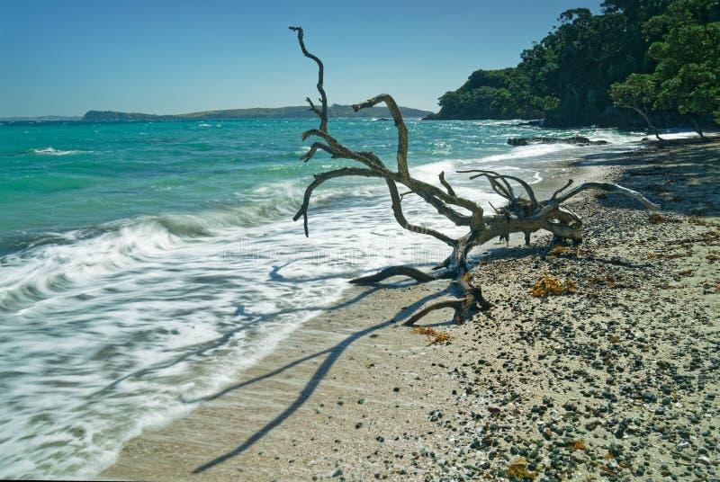 Форма жизни чужеземца на заповеднике острова Tiritiri Matangi пляжа Hobbs открытом, Новой Зеландии стоковые изображения