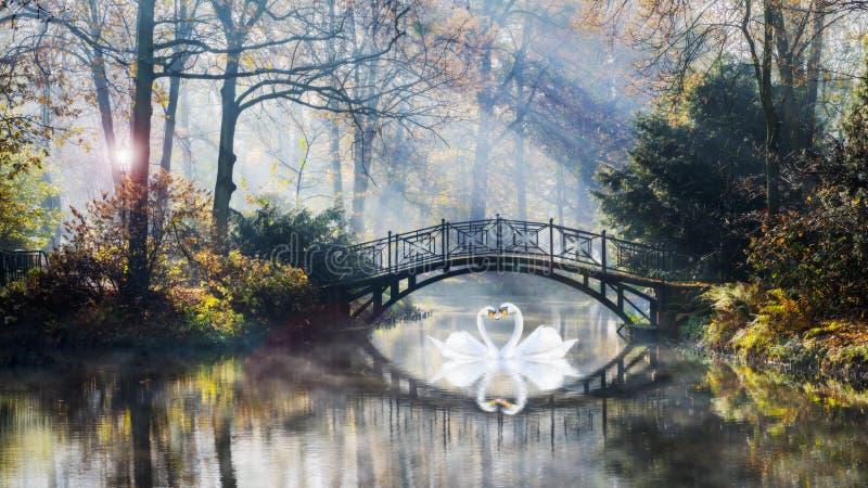 Форма сердца лебедей любит ответную часть на всю жизнь в сценарном взгляде ландшафта туманной осени пруда романтичного с красивым стоковые фотографии rf
