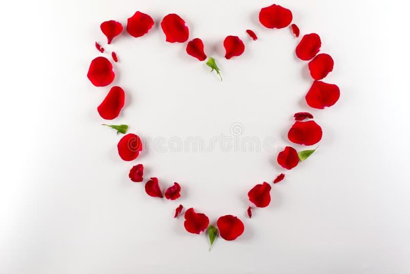 Форма сердца сделала лепестков красной розы, на белой предпосылке Взгляд сверху, космос экземпляра стоковые изображения rf