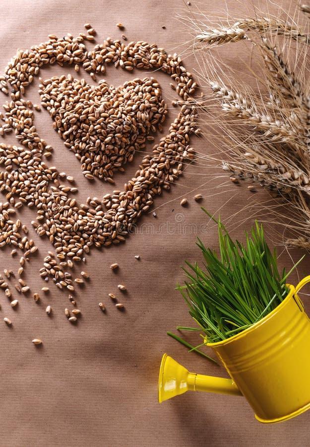 Форма сердца семян травы пшеницы со свежей пшеницей в моча консервной банке стоковые фотографии rf
