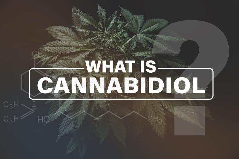 Формула Cannabidiol CBD, конопля культивирования, растущая конопля indica, зеленый цвет предпосылки, CBD стоковые фото