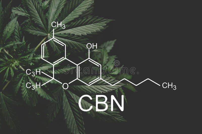 Формула CBN, cannabinoid медицинская марихуана, растя марихуана, дело despancery Элементы CBD и THC в коноплях стоковое изображение