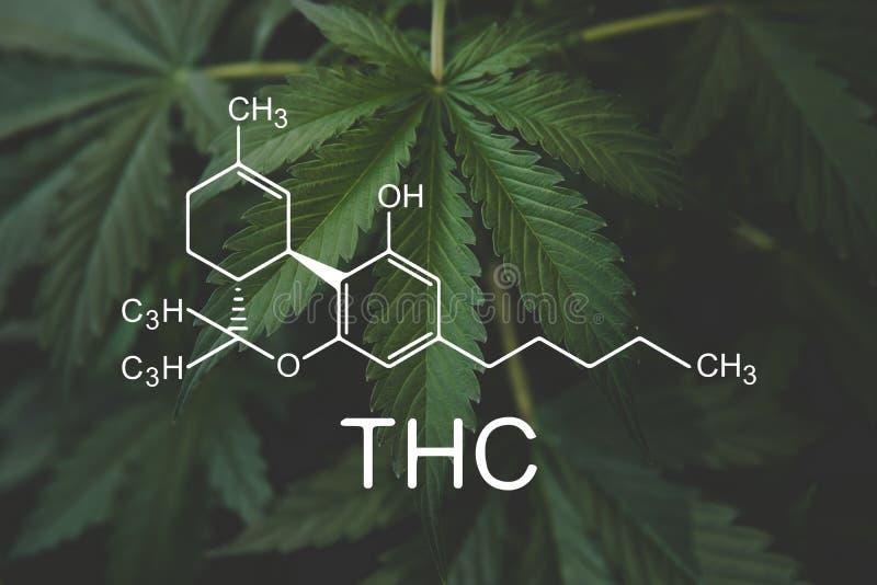 Формула THC, Tetrahydrocannabinol cannabinoids и здоровье, медицинская марихуана, индустрия пеньки, CBD и THC стоковые фото
