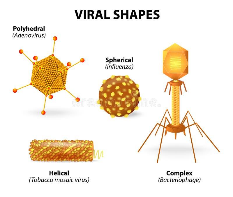 Формы вирусов иллюстрация штока