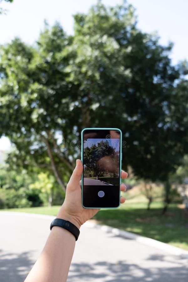 Фотографировать дерево со смартфоном стоковые фотографии rf
