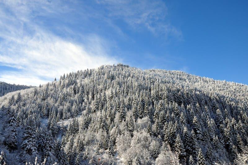 Фотография ландшафта зимы стоковые фото