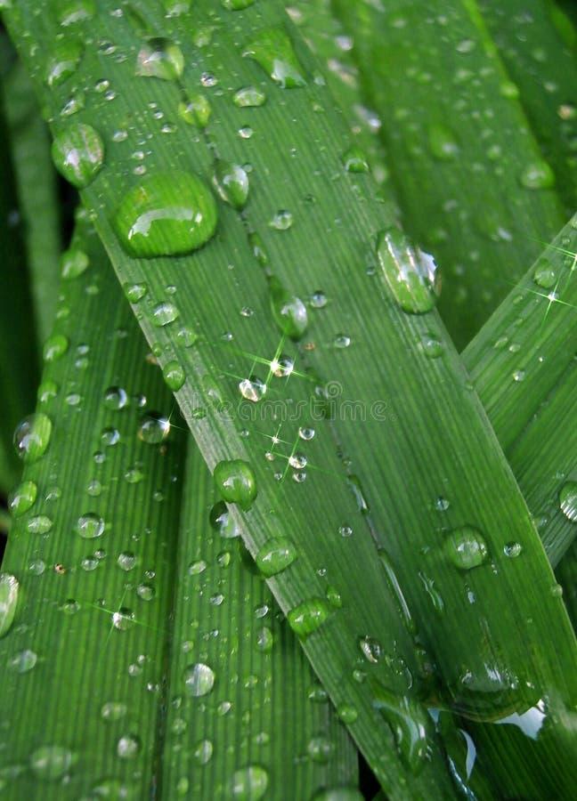 Фотография макроса дождя падает на зеленую траву стоковое изображение