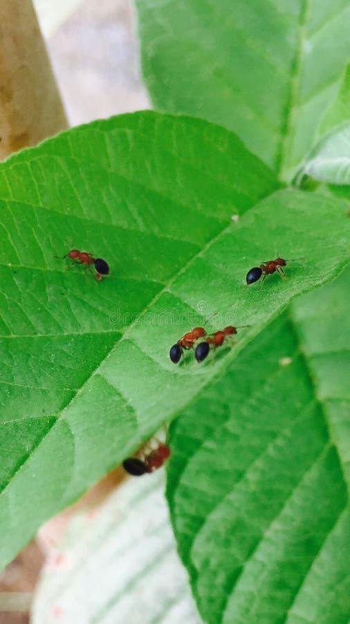 фотография муравья стоковая фотография