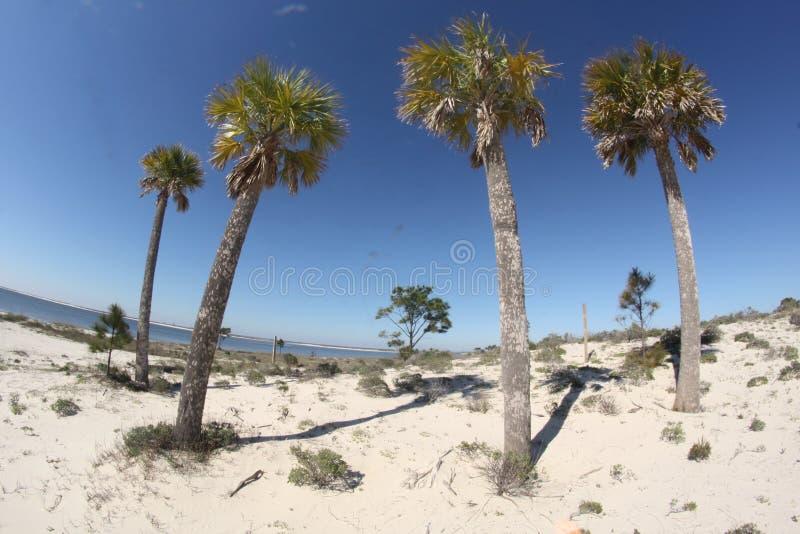 Фотография пальмовых деревьев на пляже стоковые изображения rf