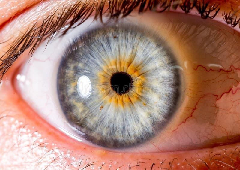 Фотография радужки Близкая съемка макроса зрачка очень побледнейте - голубой и оранжевый стоковое фото