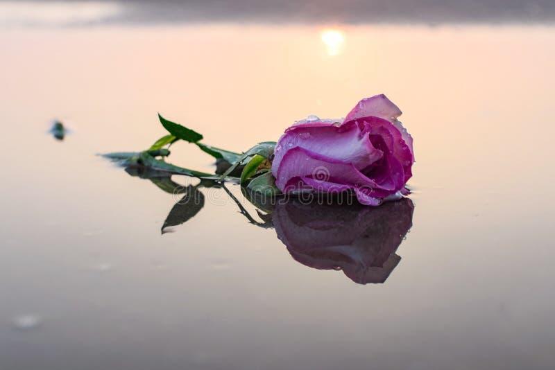 Фотография цветка природы стоковое изображение
