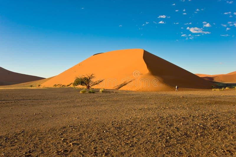 Фотограф перед огромной оранжевой дюной в Намибии namib Намибия дюны пустыни стоковые изображения