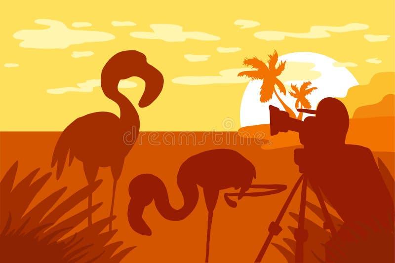 Фотограф фотографирует фламинго в природе бесплатная иллюстрация