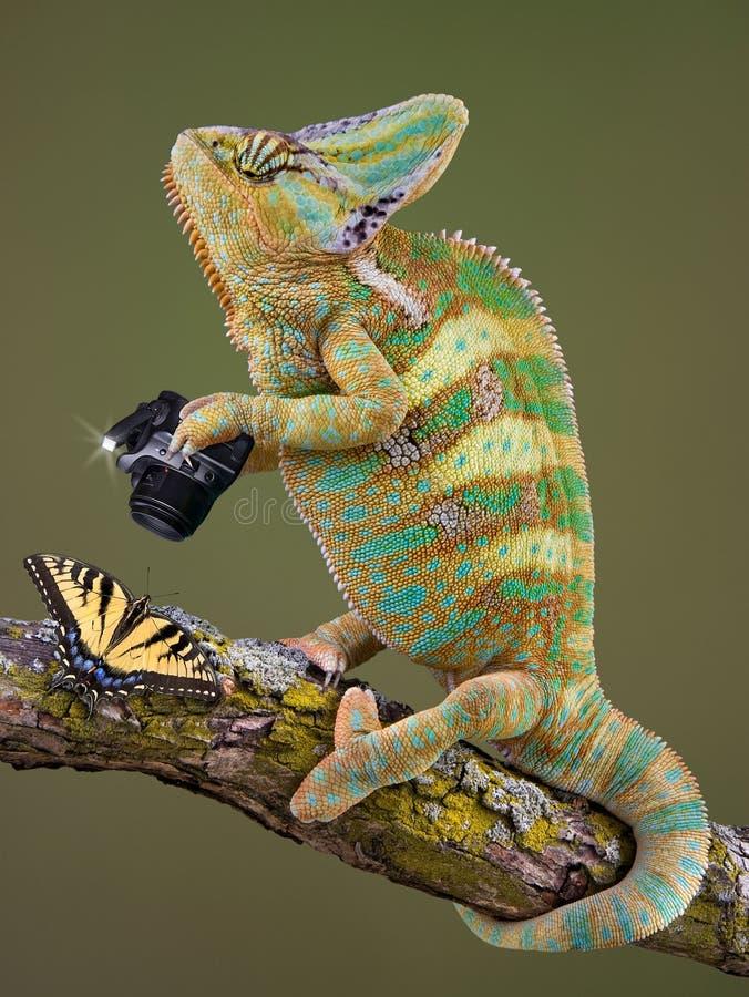 фотограф хамелеона стоковая фотография