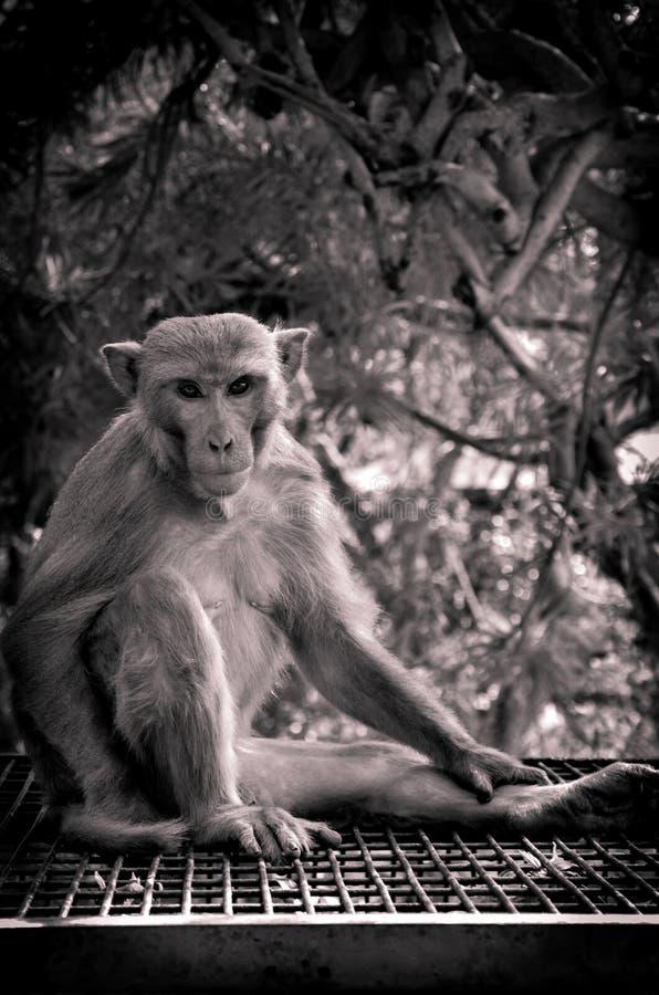 Фотосессия обезьяны это интересное движение на день стоковая фотография