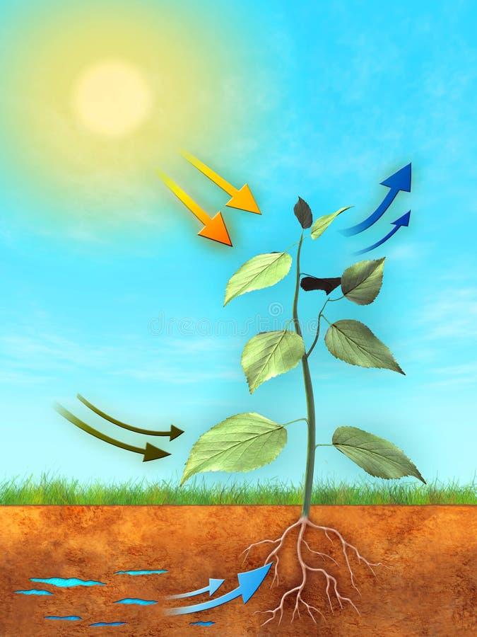 фотосинтез иллюстрация штока