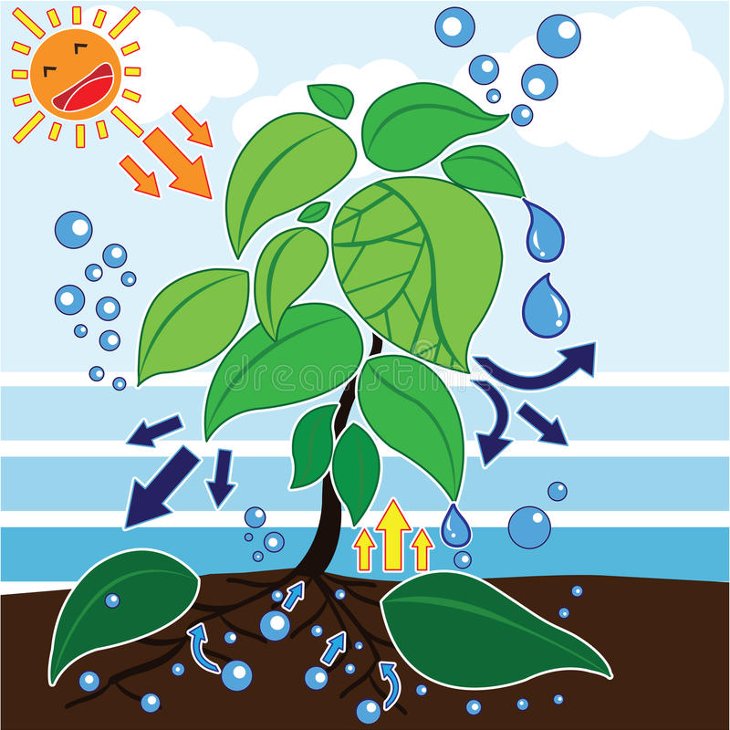 приготовить заварные топик по английскому про фотосинтез при покупке