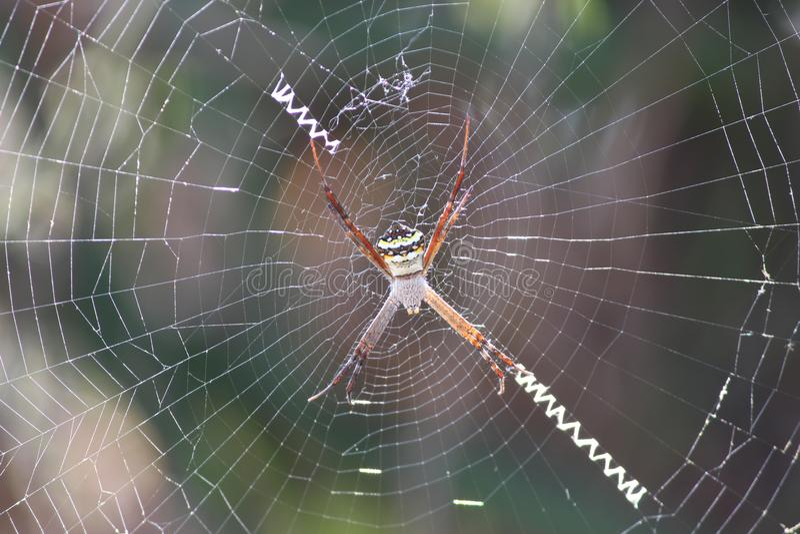 Фотоснимки паука стоковая фотография rf