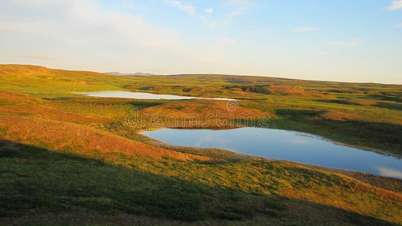 Фотоснимок лета ландшафта тундры стоковое фото rf