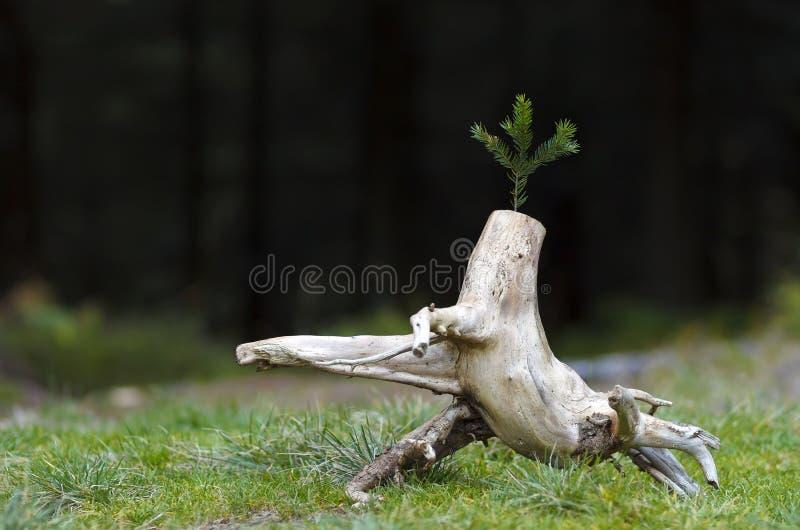 Фото абстрактного stub в природе с запачканным темным backg стоковое фото rf