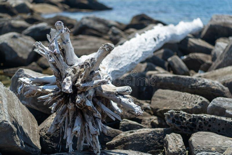 Фото белого высушенного приставанного к берегу дерева против утесов стоковое изображение
