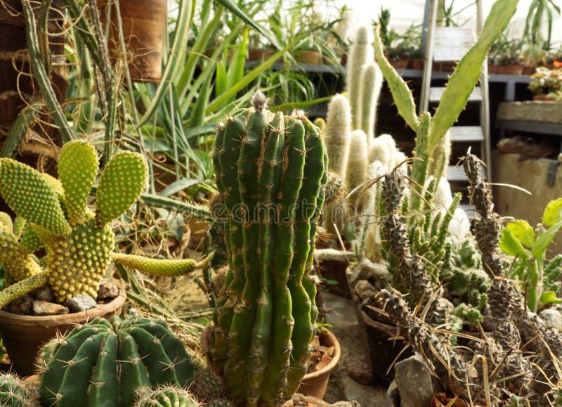 Фото взгляда со стороны заводов кактуса Кактус и заводы пустыни в ботаническом саде стоковая фотография