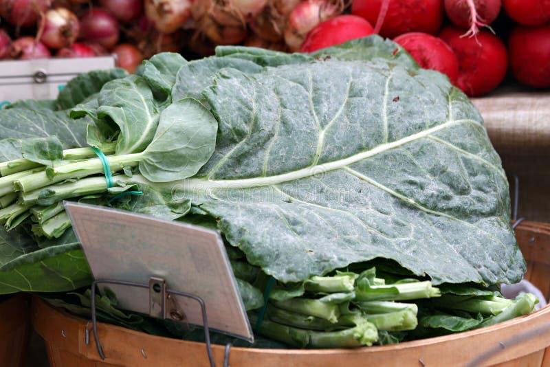 фото зеленых цветов collard свежее стоковые изображения