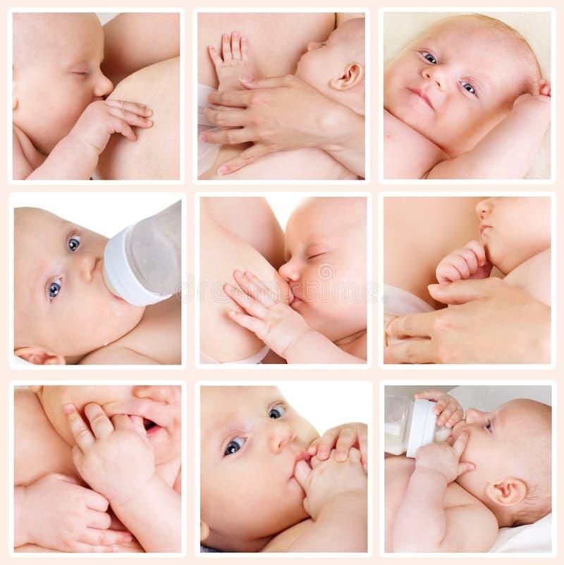 фото коллажа младенцев стоковое фото rf
