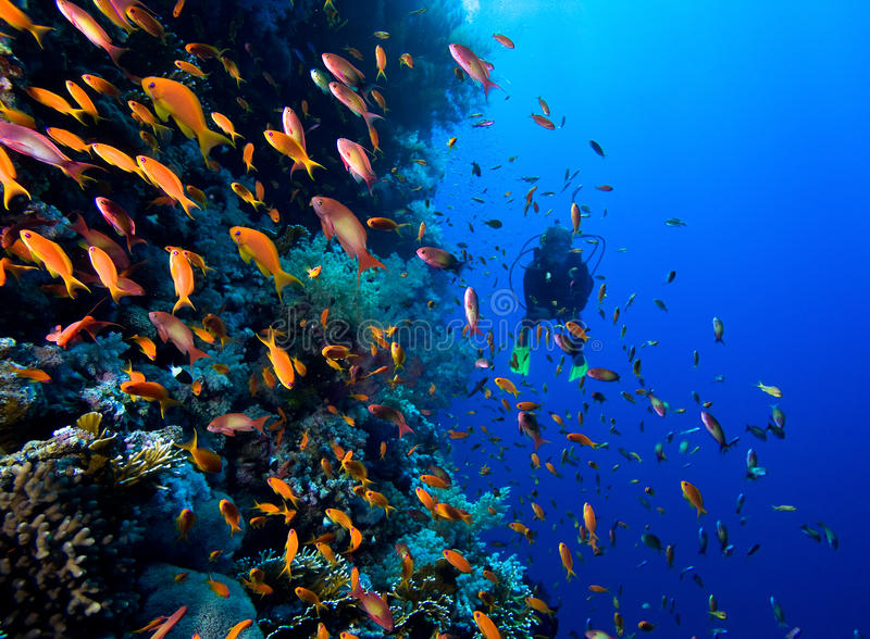 Фото колонии коралла стоковое фото