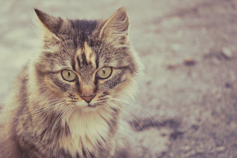 Фото красивого пушистого кота любимчики стоковые изображения rf