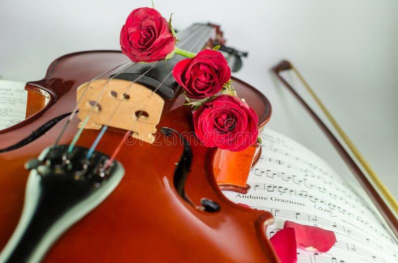 Фото крупного плана скрипки и роз стоковые изображения