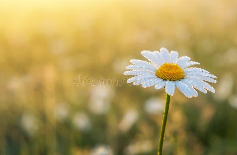 Фото крупного плана цветка стоцвета стоковое изображение rf