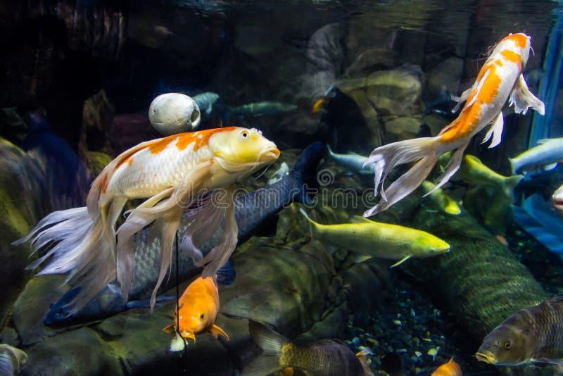 Фото макроса нескольких рыб красоты стоковая фотография