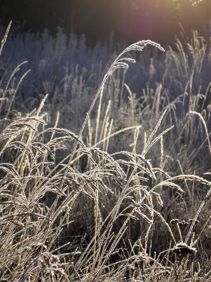 Фото макроса показывая траву покрыло налет инею wirth стоковые фотографии rf