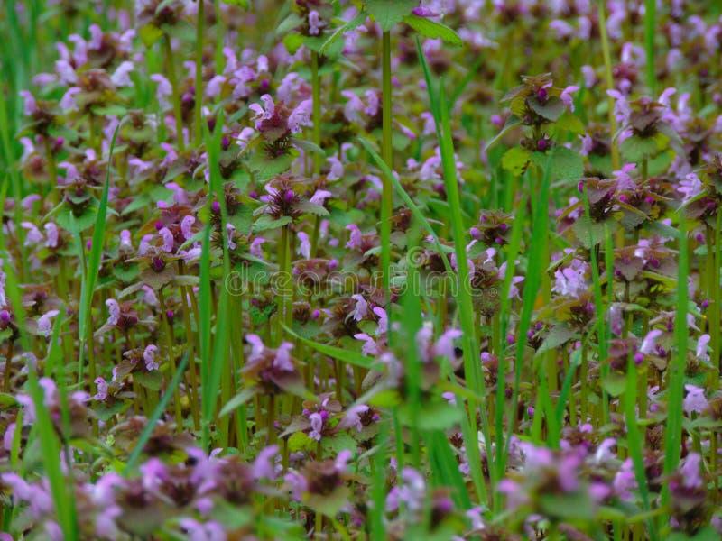 Фото макроса с полевыми цветками декоративной предпосылки текстуры одичалыми herbaceous заводов стоковое изображение rf